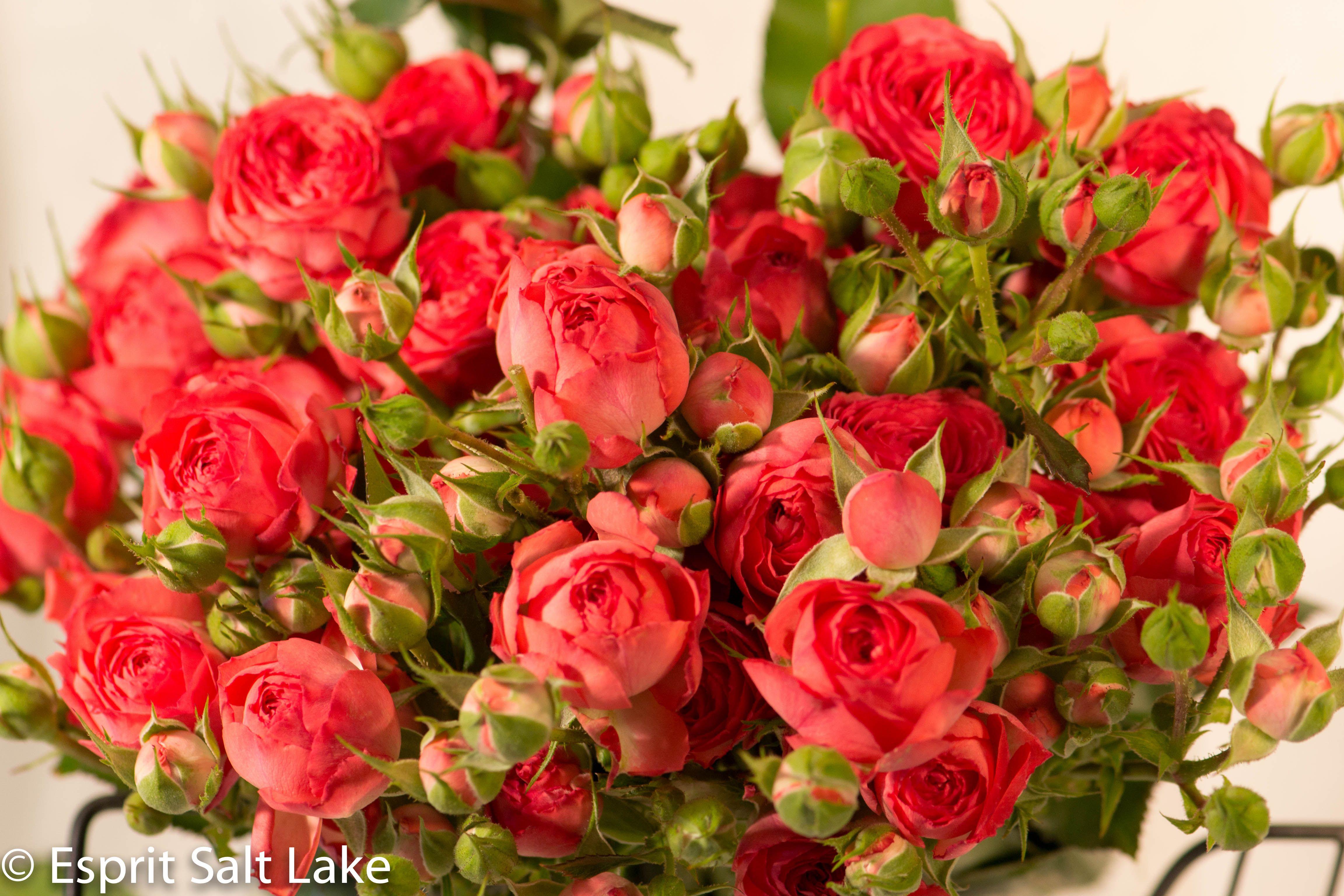 Coral Garden Rose coral gem garden spray rose coral | raw garden roses | pinterest