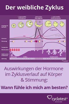 ᐅ Weiblicher Zyklus: Wie ist der Menstruationszyklus? | cyclotest