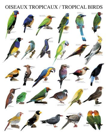 Types Of Birds Birds Tropical Birds Bird Poster Birds