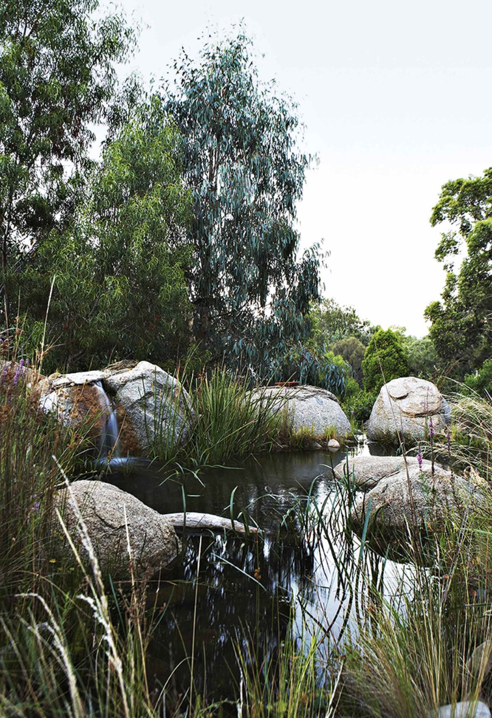 A native bushland garden in the heart of Melbourne (With