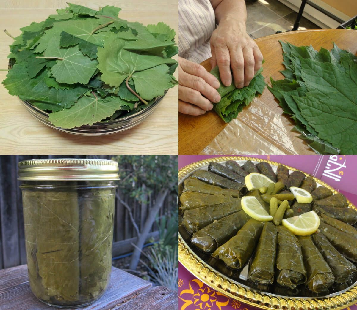 أفضل الطرق لحفظ ورق العنب الطازج لسنوات طويلة عالم الطبخ والجمال Cooking Zolo