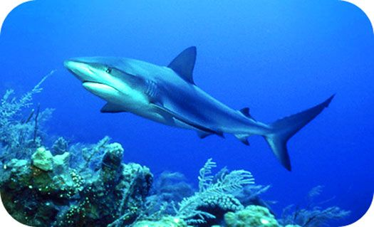 Shark Totem and Symbolism (Pluto in the 1st/ Neptune & Mars