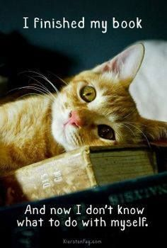 I finished my book and now I don't know what to do with myself. (Read another book, kitty!)