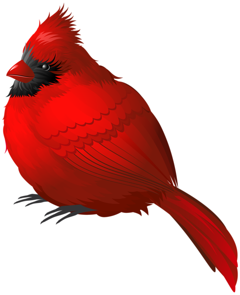 red winter bird png clipart image cardinals pinterest clipart rh pinterest ca cardinal clip art black and white cardinals clip art