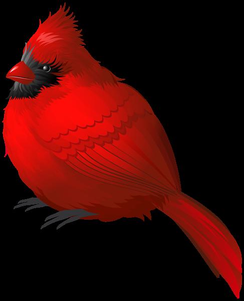 red winter bird png clipart image cardinals pinterest clipart rh pinterest ca cardinal clip art free images cardinal clip art red bird