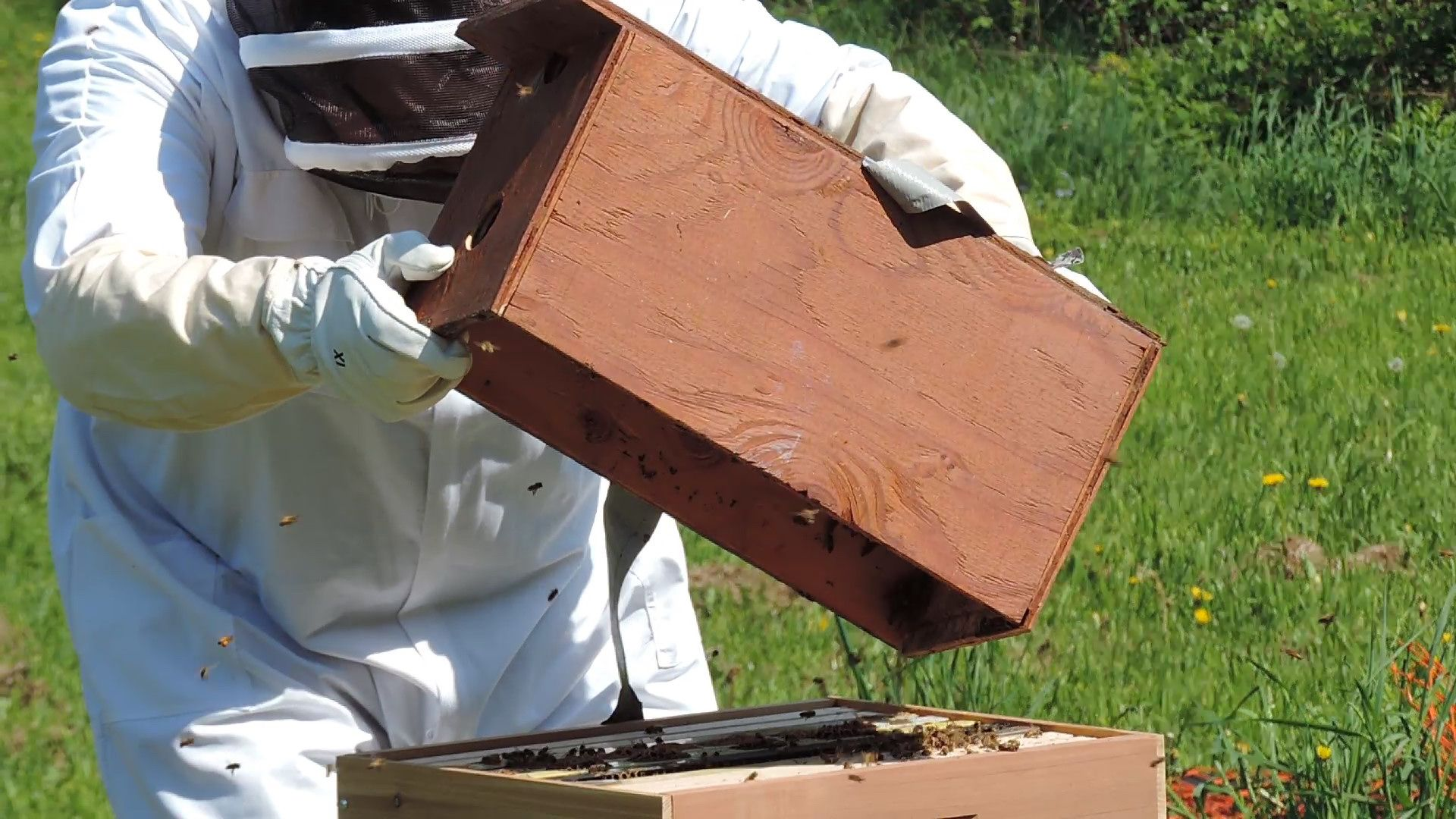 How to make a moisture quilt for a langstroth hive honey - Dumping Bees Into The New Hive