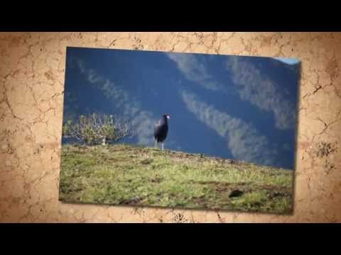Abraham Hicks ~ You cannot focus on anything without perpetuating it