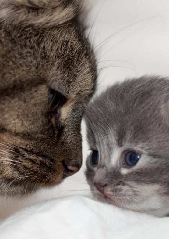 22 Adorable Pictures Of Mother Cats And Their Kittens We Love Cats And Kittens Kittens Cutest Cute Animals Animals