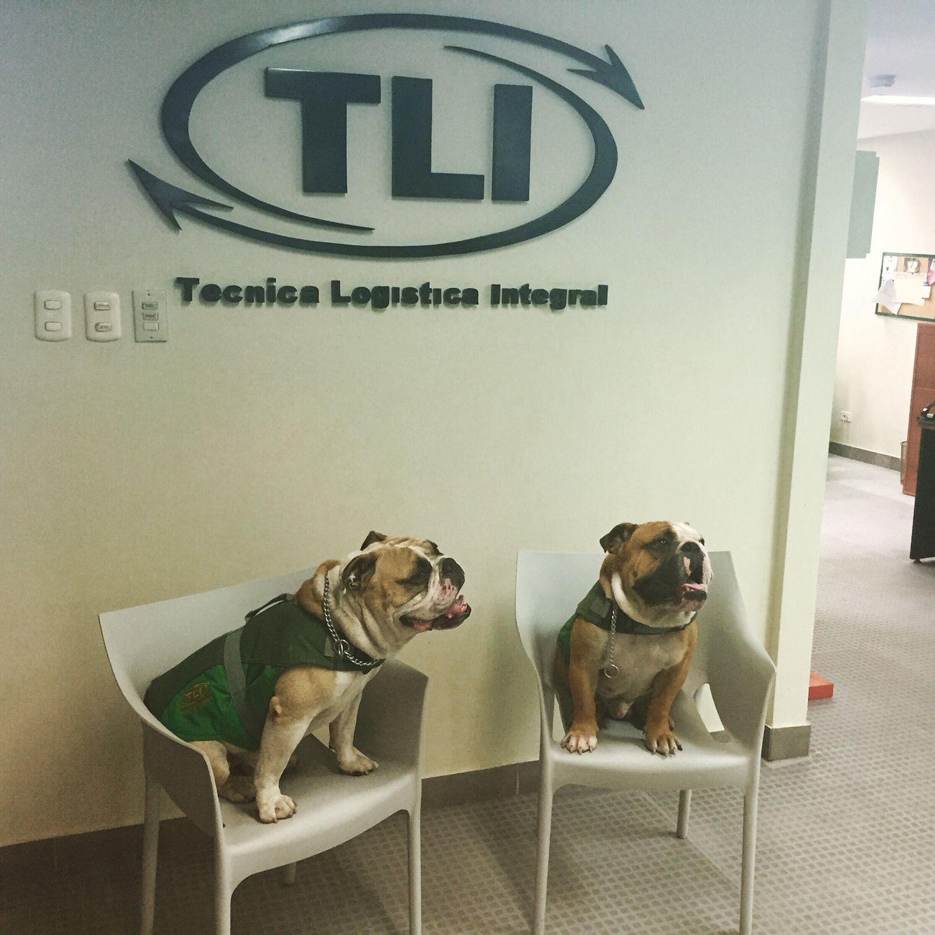 Tairo y Rocco las mascotas de TLI ❤️
