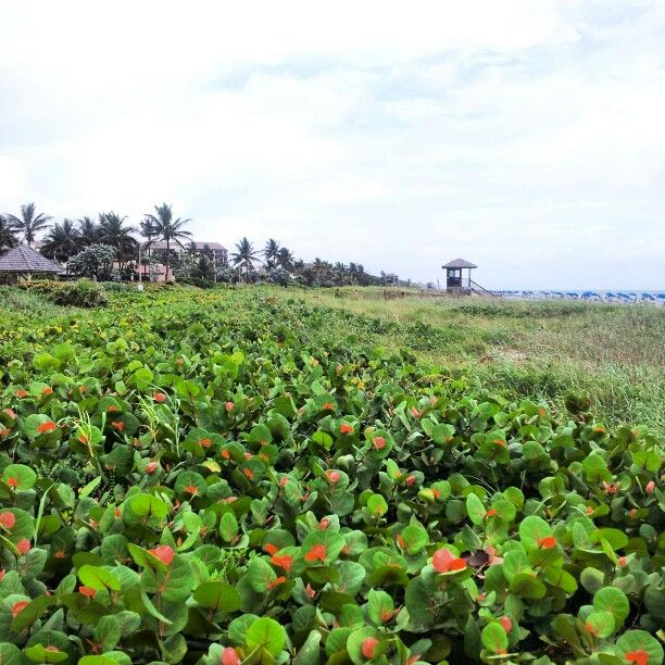 Outdoor, Farmland, Beach