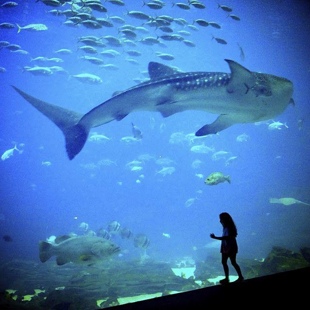 The Accidental Tour Guide Georgia Aquarium Beautiful Places To Visit Places To Go