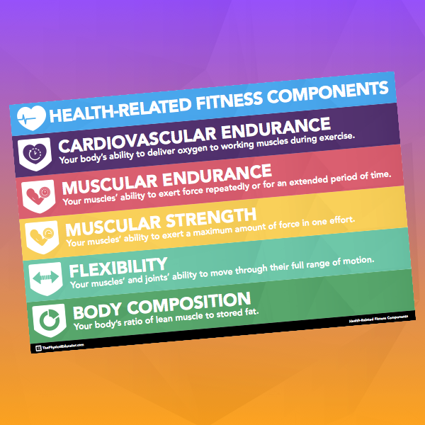 PE Resources and Visuals Physical education, Muscular