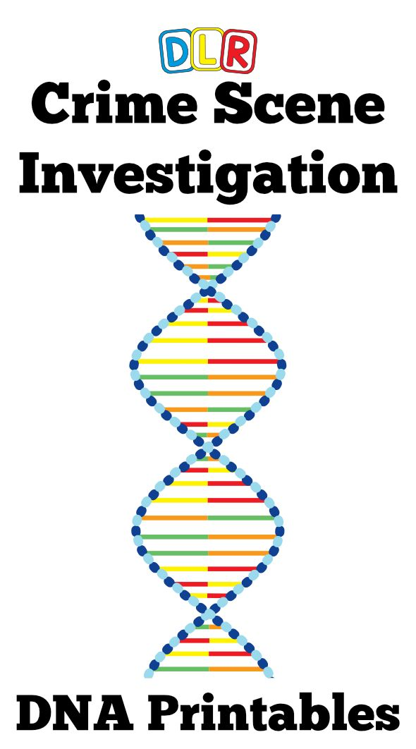Forensic Science Crime Scene Investigation Activity – Dna Fingerprinting Worksheet