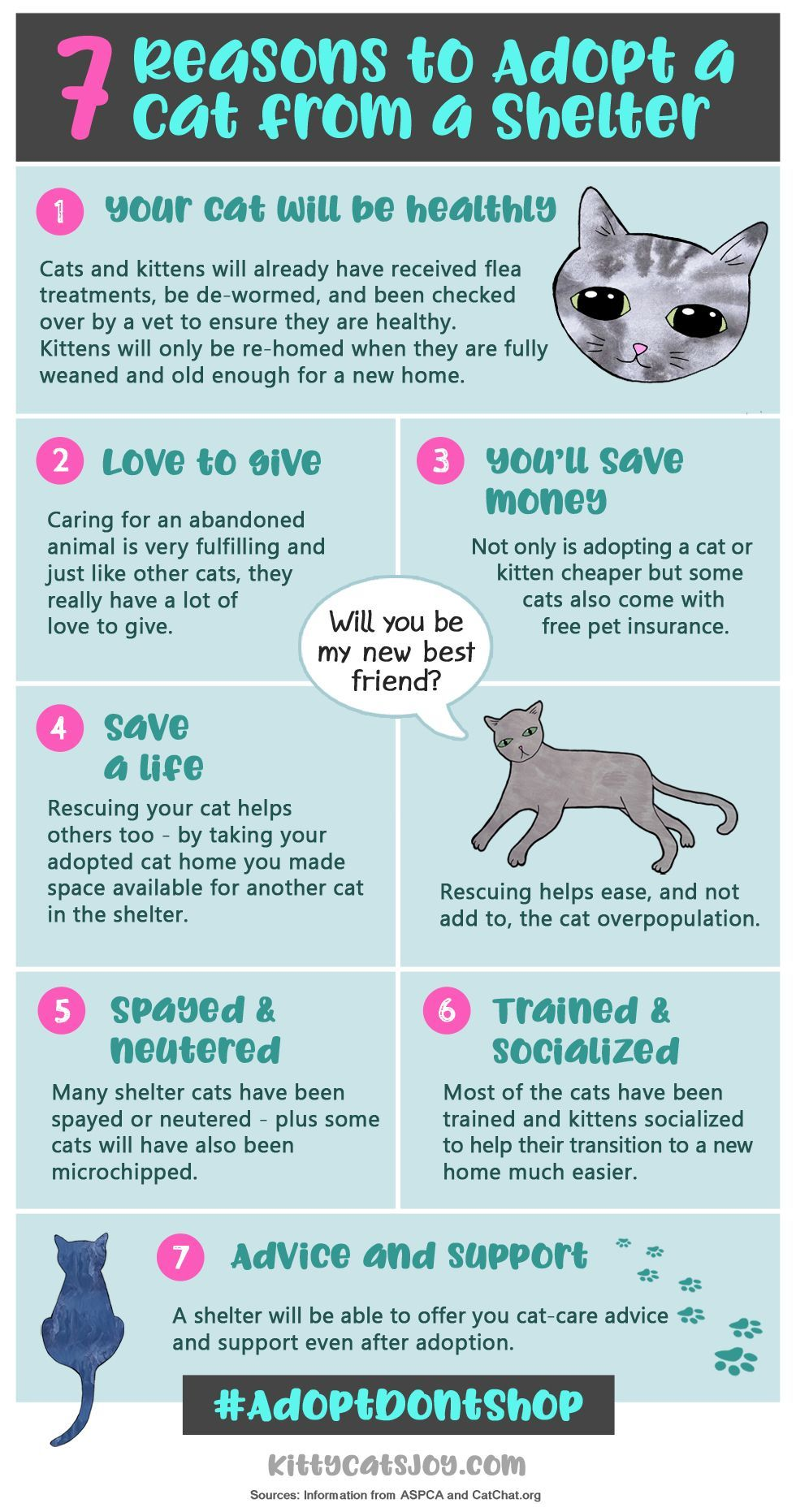 7 Helpful Tips For Introducing A New Kitten To Your Home Live Long And Pawspurr In 2020 Cat Training Kitten Cat Care Tips