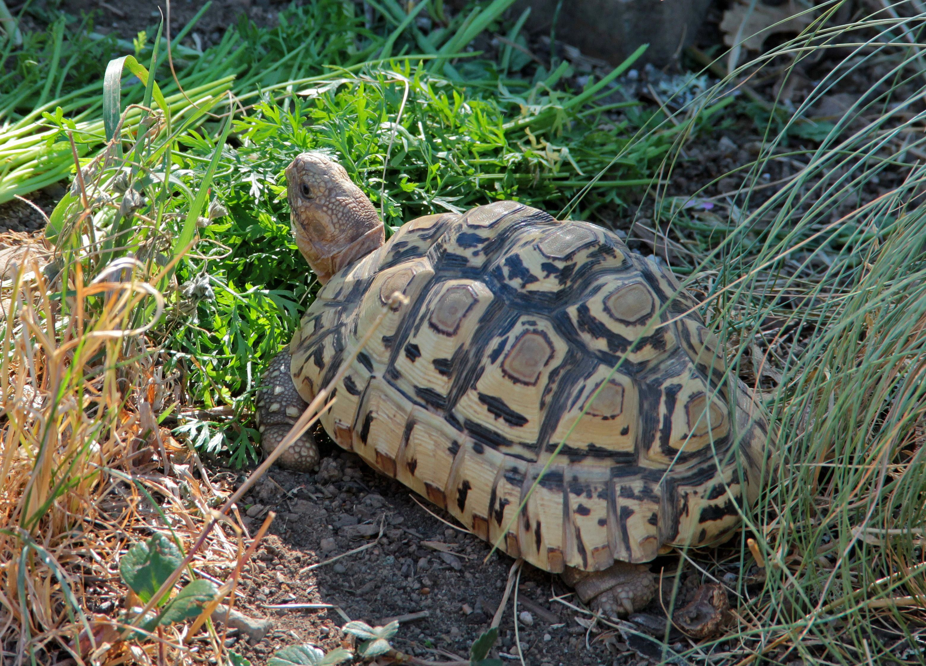 how to care for a turtle with a cracked shell