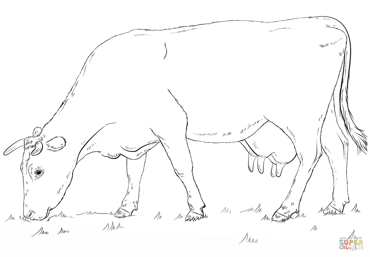 Grazing Cow Coloring Page Free Printable Coloring Pages Cow Coloring Pages Cow Drawing Animal Drawings