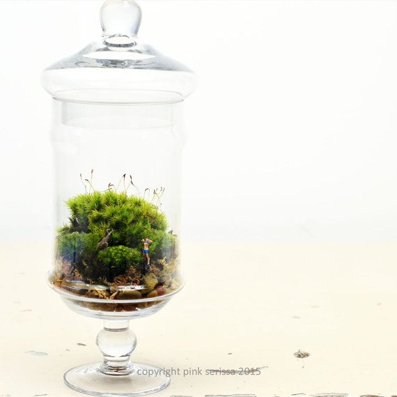 Moss Terrarium  Flasher  DIY Kit  Apothecary by PinkSerissa My