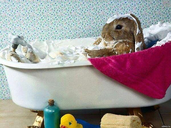 Bunny in a bath