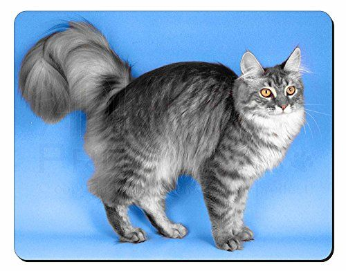 Silver Maine Coon Cat Computer Mouse Mat Christmas Gift I... https://www.amazon.co.uk/dp/B0010E7R1A/ref=cm_sw_r_pi_dp_Pm7Mxb0YE8756