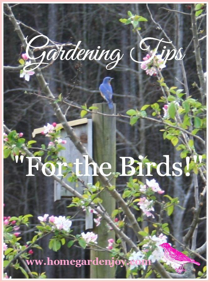 Wunderbare Hinterhof Vogel Garten Ideen #Garten #Gartenplanung #GartenIdeen