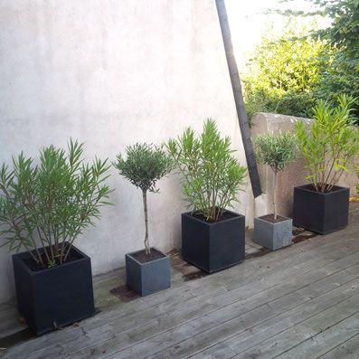 Am nagement v g tal d 39 une terrasse le mur est expos for Terrasse mur vegetal