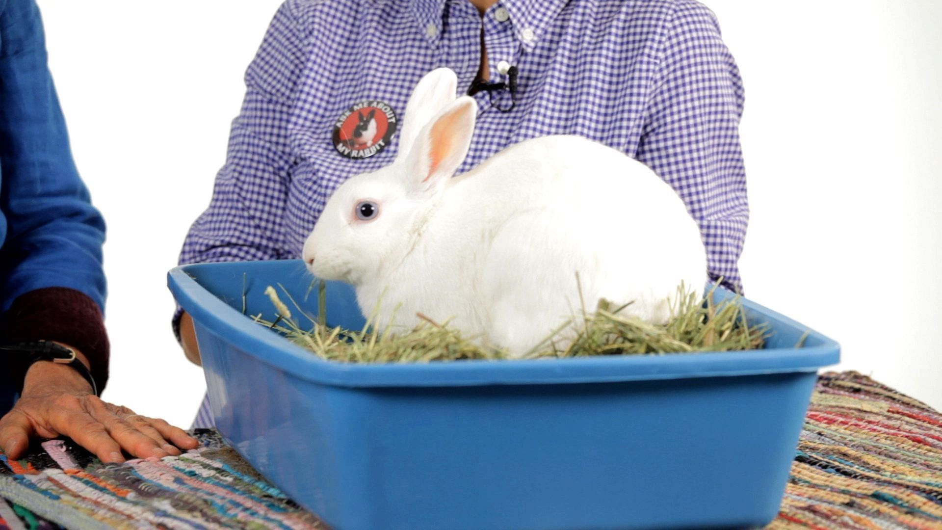 Can Rabbits Be Litter Trained? Pet Rabbits Pet rabbit