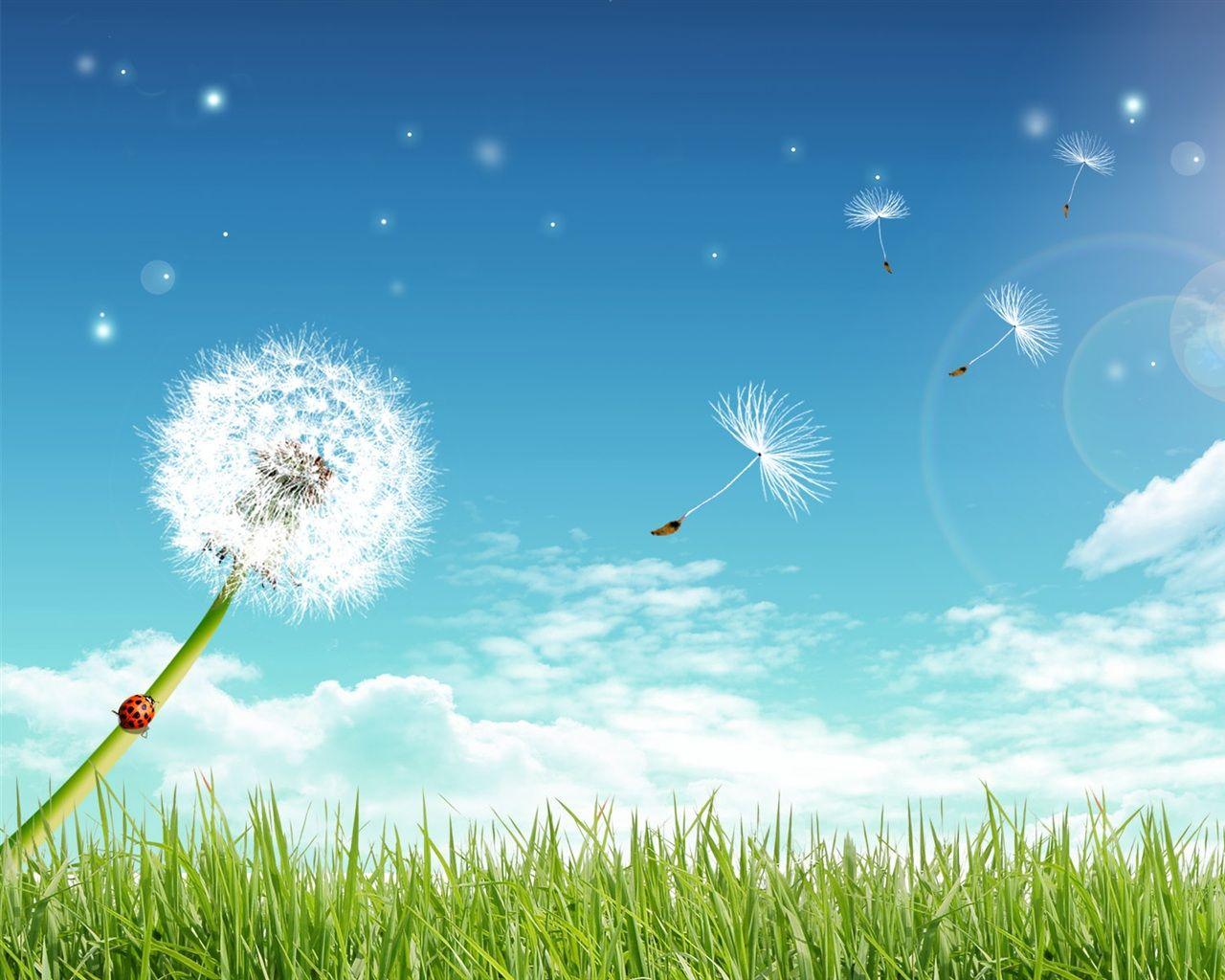 Hình ảnh đẹp hoa Bồ Công Anh lãng mạng sâu lắng - Hình Ảnh Đẹp HD   Bồ công  anh, Hình ảnh, Ảnh bầu
