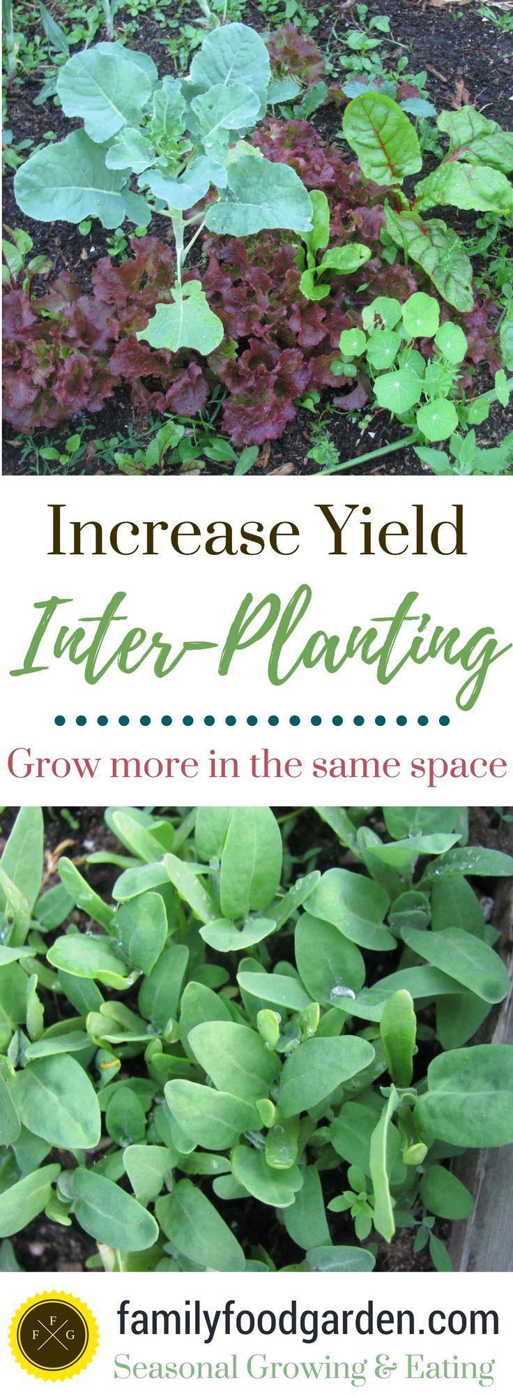 Inter-Planting for More Garden Yields - Family Food Garden