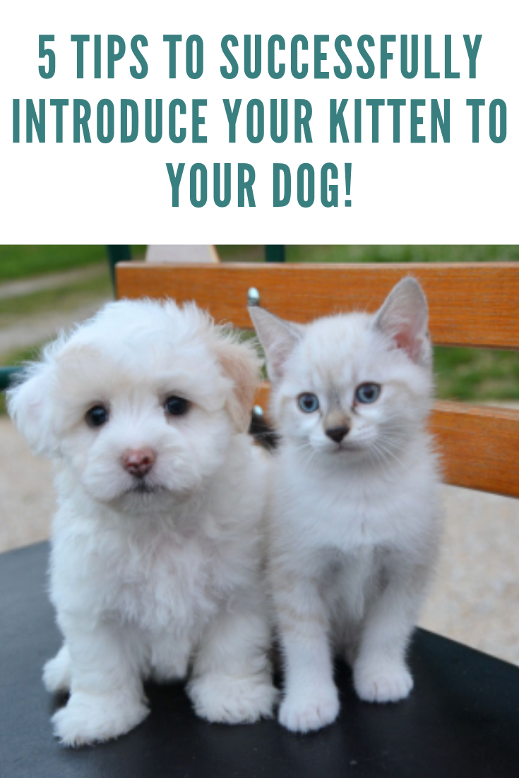 How To Introduce A Dog To A Cat In 5 Easy Steps Dogs Cats Cat Facts
