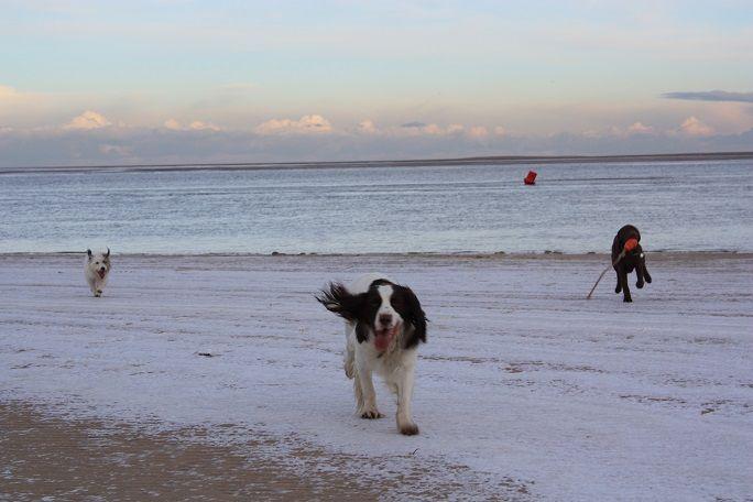 Winter on Wells beach!
