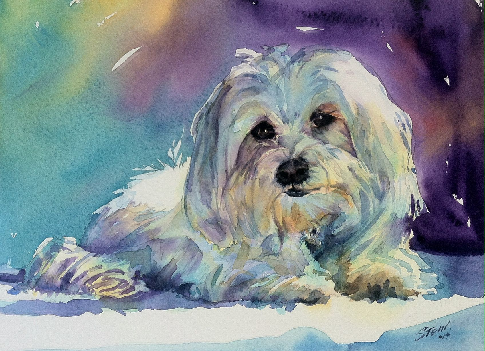 maltese painting kismet 7x10 watercolor maltese dog artwork dog 3757