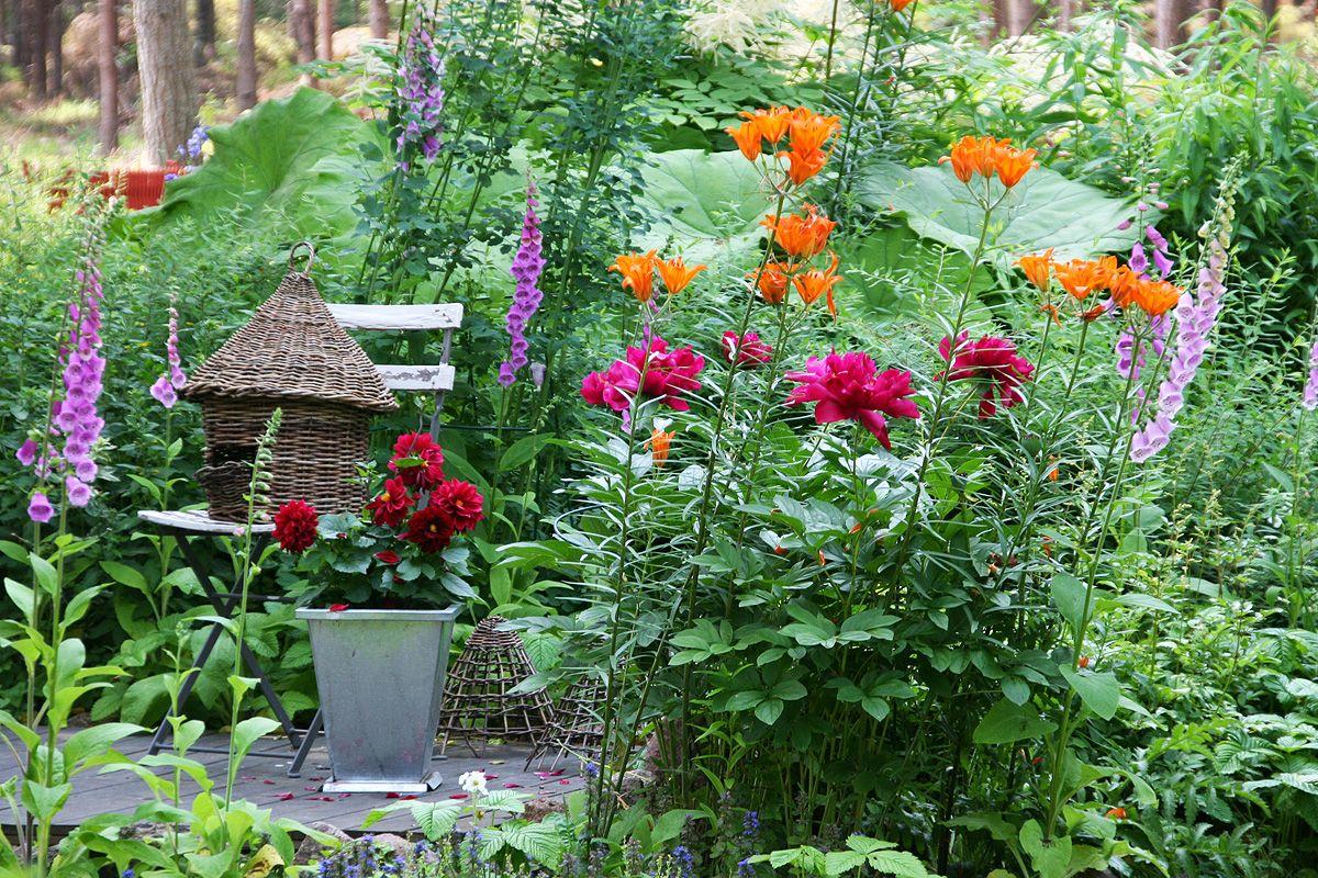 Järvisten puutarha Pyhtäällä