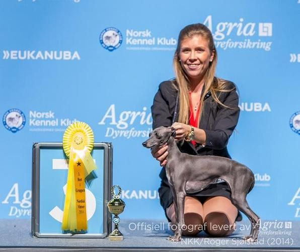 Congratulations to Lena Hennie Stormer Dahl for her win of Group 3 with her homebred IG, at the Nordic Winner show in Norway, November 2014. Of course with her Handlers showlead!