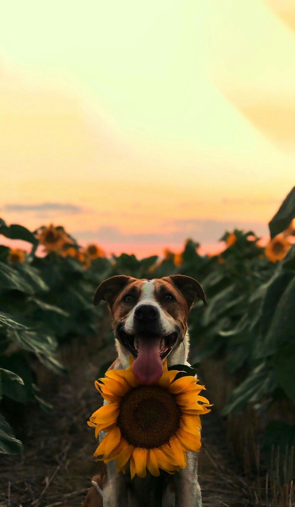 Pin by Rayvyn on PHOTOGRAPHY in 2019 Dog wallpaper