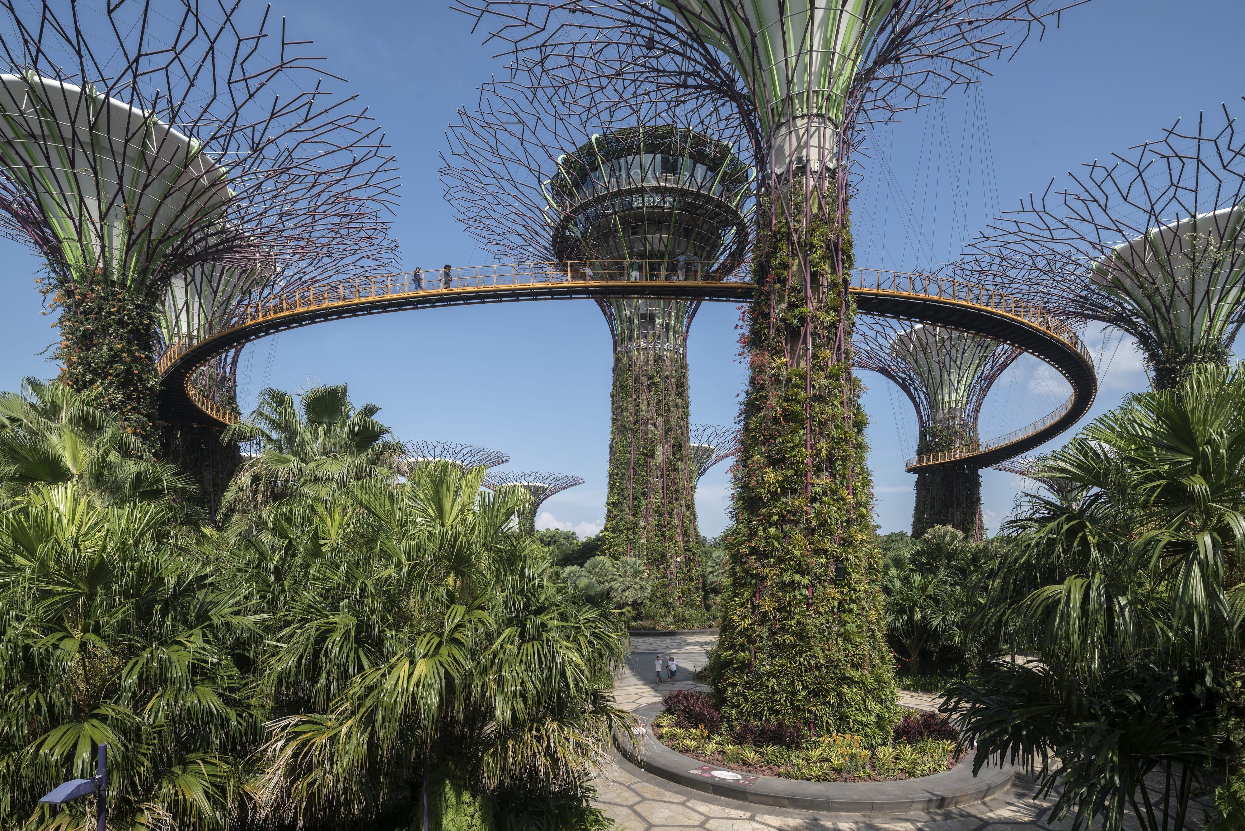 新加坡海湾超级花园 Grant Associates Landscape Projects Courtyard Garden Gardens By The Bay