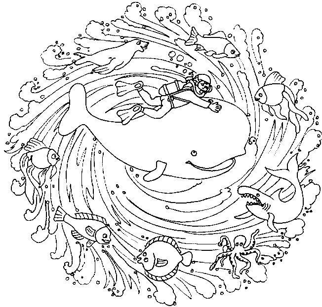 Coloriage Baleine Mandala.Epingle Par Kiwi Sur Dessins Colori Mandala Et Disegni Da Colorare