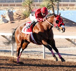 RCJ Major Storm(2008)Brookstone Bay- Major Kia By Major Rime. 3x4x4 To Dash For Cash, 5x5 To Easy Jet & Jet Deck. Shown Winning The Championships At Sunland Park S(G1) On December 28, 2014.