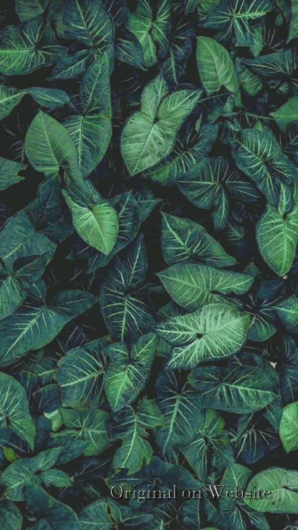 Gefunden Von Summersunhomeart Nature Iphone Wallpaper Green Wallpaper Plant Wallpaper