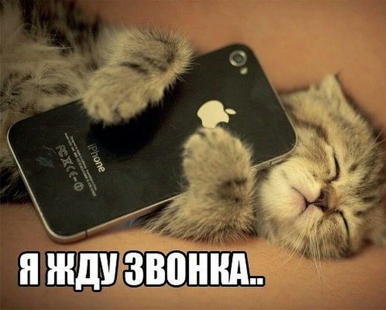 Картинка сижу на телефоне и жду твоего звонка