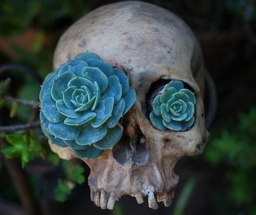 skulls (fake skulls.. this one is quite too spooky) and succulents are trending.. why not pair them :)