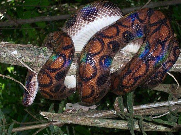 Amazon forest animals