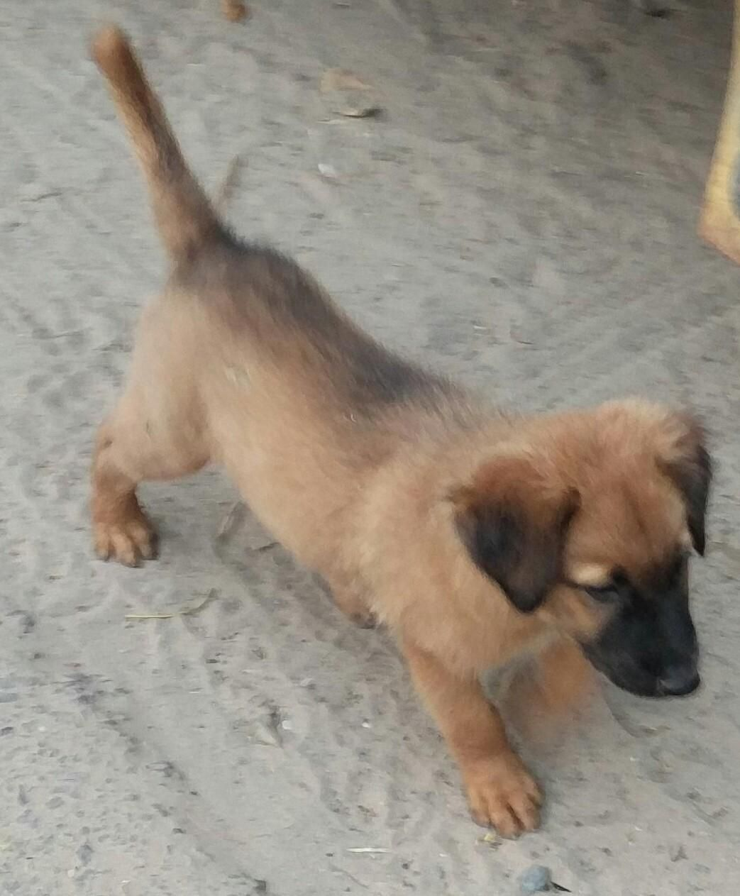 Look what I found: A puppy with a straight tail ! http://ift.tt/2eB1b96