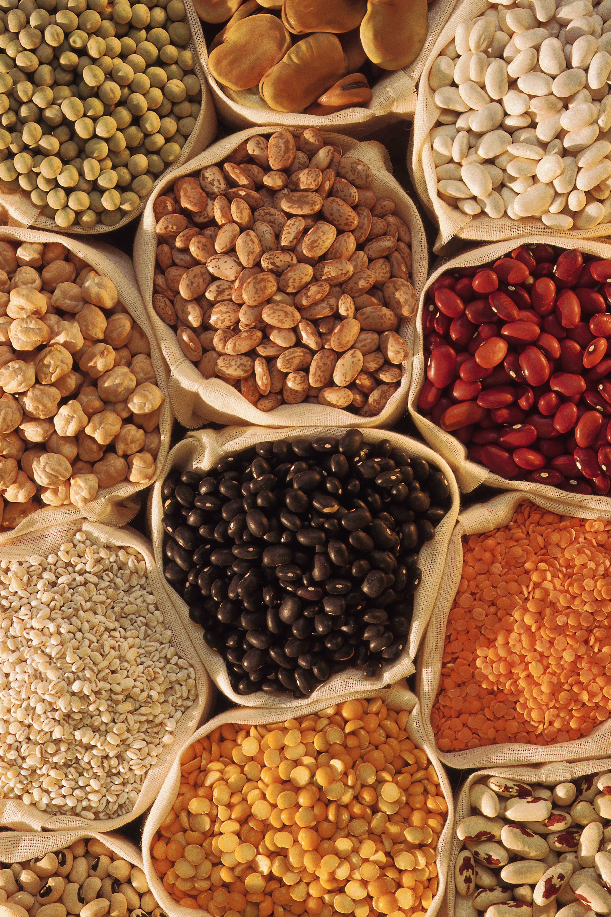 what beans to eat on high purine diet