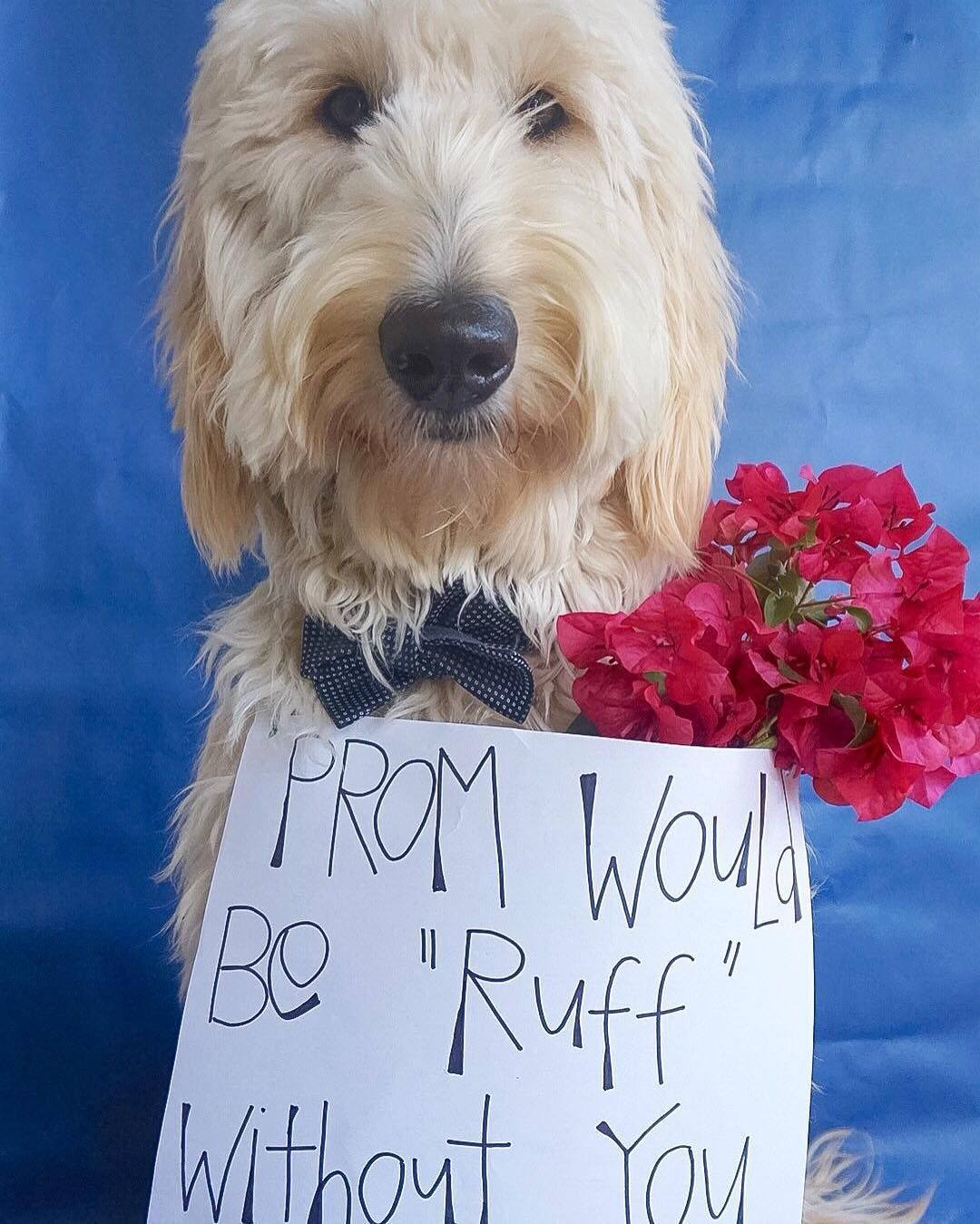 Proposal Ideas Using Pets: It's Prom Season And I'm Looking For Someone To Ask