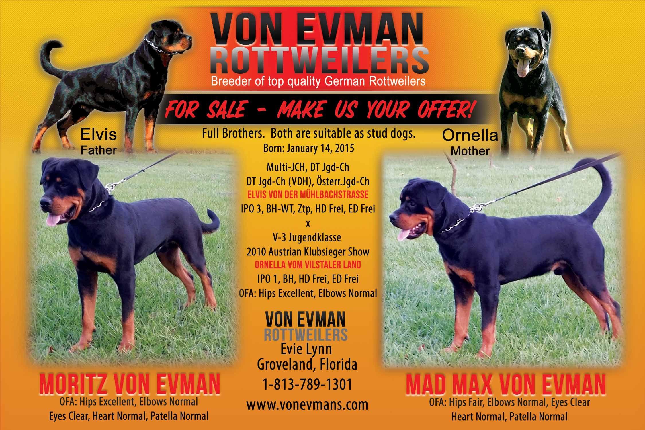 Evie Lynn Groveland Florida 1 813 789 1301 Www Vonevmans Com