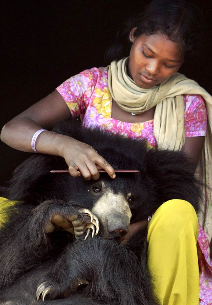 the kisan family, who live on the outskirts of lakhapada, india adopted a sloth bear cub who, following a herd of goats, wondered into their home one day and didn't want to leave...