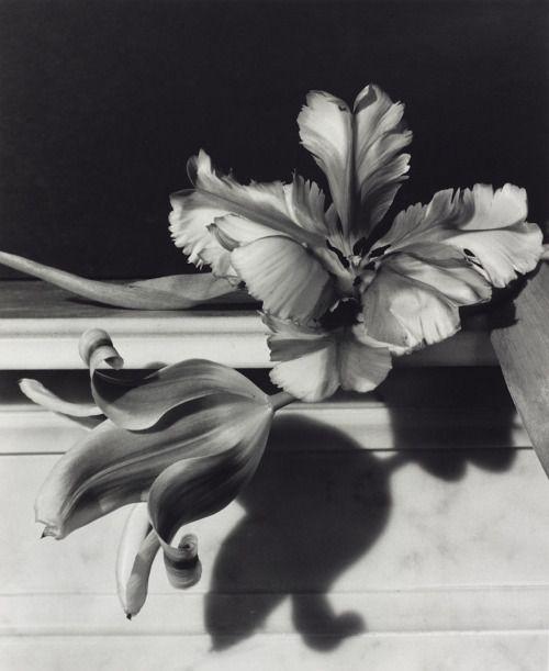 "loverofbeauty:  "" Horst P. Horst:  Tulips (1989)  """
