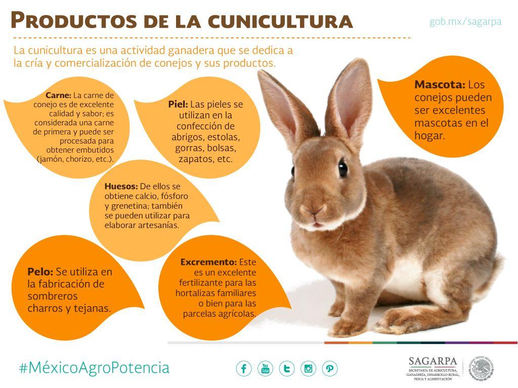 Productos De La Cunicultura Sagarpa Sagarpamx Mexicoagropotencia
