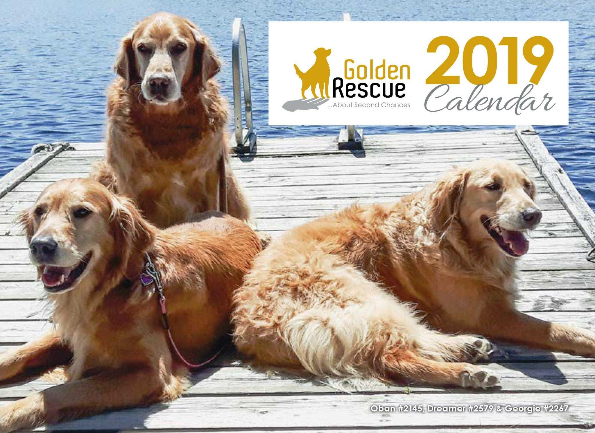 Our 2019 Golden Rescue Calendar Is Available Now Get Yours Today