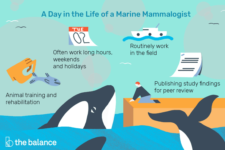 Marine Mammalogist Job Description Salary, Skills, & More